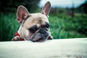 Dog allergies are pretty similar to yours