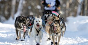 Scenes From the 2021 Iditarod Trail Sled Dog Race