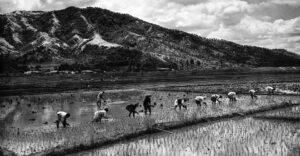 How Land Reform Underpins Authoritarian Regimes