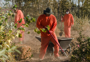 The'healing forest' planted by indigenous US inmates-Positive News