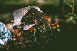 Compost fights off foodborne pathogens like Salmonella