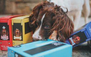 Best Pet Food Container: Cat, Dog Food Storage