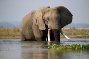 Zimbabwe to sell hunting rights to shoot endangered elephants
