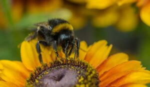 What went right this week: Dutch bee strategy, and more positive news