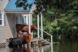Houses on floodplains are massively overvalued