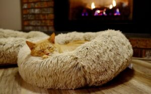 Best Cat Beds For Your Furry Friend