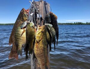 The COVID-19 ripple effects on fish and fishing